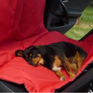 Pet car-sling